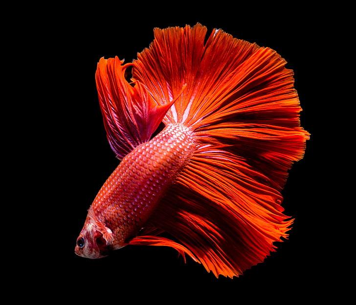 Kırmızı Balık Melodika Notaları